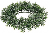 Iced Boxwood Candle Rings 6.25 Inch