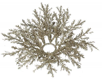 Arborvitae 1.5 Inch Candle Ring