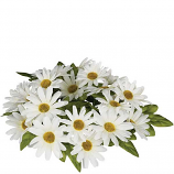 Daisy 4.5 Inch Flower Candle Ring White