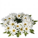 Daisy 6 Inch Flower Candle Ring White