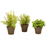 Mini Foliage Pot 3 Pieces Assorted