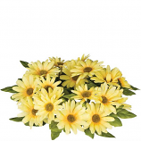 Daisy 4.5 Inch Flower Candle Ring Yellow